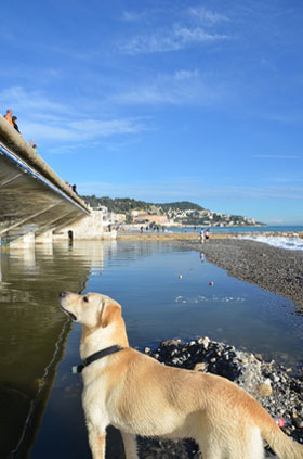 Hund an der Promenade in Nizza